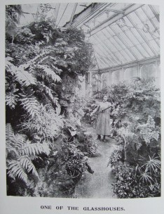 10. the glasshouses