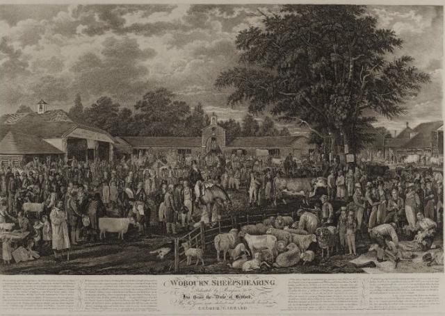 Woburn sheepshearing