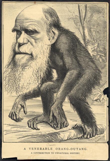 Apeman Darwin image